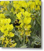 Panorama Hills Bluffs Bee Painting Metal Print by Donna Munro