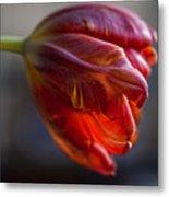 Parrot Tulips 16 Metal Print by Robert Ullmann