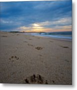 Pawprints Metal Print by Mike Horvath