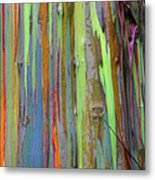 Peeling Bark- St Lucia. Metal Print by Chester Williams
