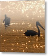 Pelican Sunrise Metal Print by Mike  Dawson