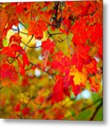 Photo Synthesis Metal Print by Diane E Berry
