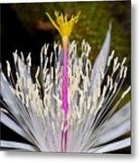 Pink And Yellow Pistil Metal Print by Kelley King