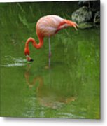 Pink Flamingo Metal Print by Cindy Lee Longhini
