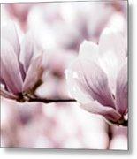Pink Magnolia Metal Print by Elena Elisseeva