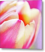 Pink Tenderness Metal Print by Angela Doelling AD DESIGN Photo and PhotoArt