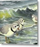 Piping Plovers At The Shore Metal Print by Tara Milliken