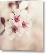 Plum Blossoms Metal Print by Lisa Russo