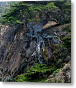 Point Lobos Veteran Cypress Tree Metal Print by Charlene Mitchell