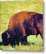 Powerful Leader Metal Print by Jan Amiss Photography