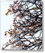Praha Tangled Tree Metal Print by Shawn Wallwork