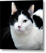 Pretty Kitty Cat 1 Metal Print by Andee Design