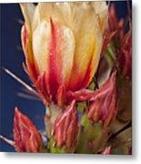 Prickly Pear Flower Metal Print by Kelley King