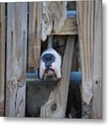 Psst Help Me Outta Here Metal Print by DigiArt Diaries by Vicky B Fuller