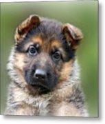 Puppy Portrait Metal Print by Sandy Keeton
