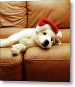 Puppy Wears A Christmas Hat, Lounges On Sofa Metal Print by Karina Santos