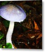 Purple Mushroom Russula Cyanoxantha Metal Print by Andrew Pacheco
