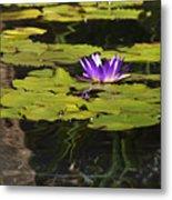 Purple Water Lilly Distortion Metal Print by Teresa Mucha