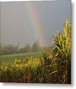Rainbow Arching Into Field Behind Stream Metal Print by Stockbyte