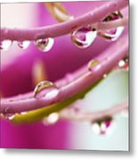 Raindrops Metal Print by Marilyn Hunt