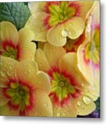Raindrops On Yellow Flowers Metal Print by Carol Groenen