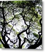 Reach For The Sky Metal Print by Karen Wiles