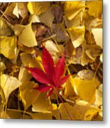 Red Autumn Leaf Metal Print by Garry Gay