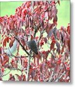 Red Bellied Woodpecker In Dogwood Metal Print by Alan Lenk