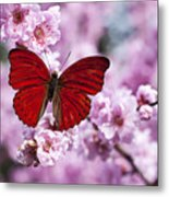 Red Butterfly On Plum  Blossom Branch Metal Print by Garry Gay