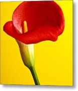 Red Calla Lilly  Metal Print by Garry Gay
