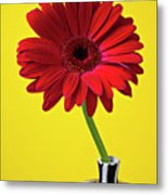 Red Mum Against Yellow Background Metal Print by Garry Gay