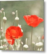 Red Poppies Metal Print by Kim Hojnacki
