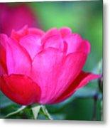 Red Rose Metal Print by Teresa Mucha