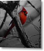 Redbird Metal Print by Shawn Wood