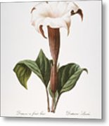 Redoute: Datura, 1833 Metal Print by Granger