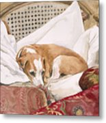 Regal Beagle Metal Print by Debra Jones