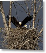 Returning Home To The Nest Metal Print by Mike  Dawson