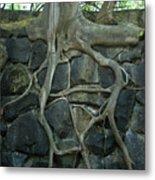 Roots And Rocks Metal Print by Douglas Barnett