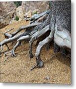 Roots Metal Print by Ernie Echols