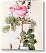 Rosa Bifera Officinalis Metal Print by Pierre Joseph Redoute