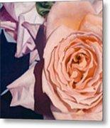 Rose Splendour Metal Print by Kerryn Madsen-Pietsch
