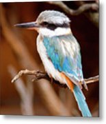 Sacred Kingfisher Metal Print by Mike  Dawson