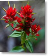 Scarlet Red Indian Paintbrush Metal Print by Karon Melillo DeVega
