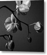 Scotopic Vision 3 - Orchid Metal Print by Pete Hellmann
