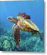 Sea Turtle Underwater Metal Print by M.M. Sweet