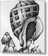Seashell And Barnacles Metal Print by James Williamson