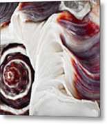 Seashell Detail Metal Print by Elena Elisseeva