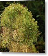 Seasons Of Magic - Hoh Rainforest Olympic National Park Wa Metal Print by Christine Till