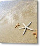 Seastars On Beach Metal Print by Mary Van de Ven - Printscapes