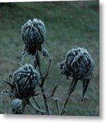 Shadowy Frozen Pods From The Darkside Metal Print by Douglas Barnett